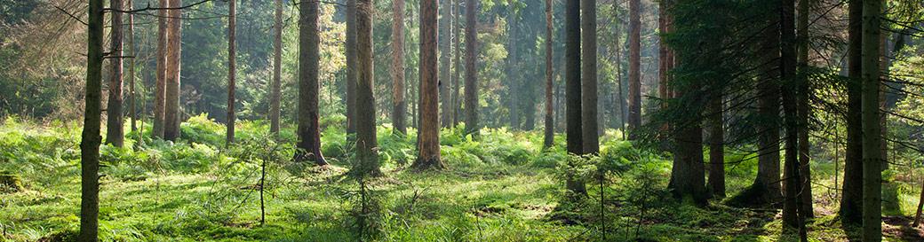 ARA Timber AB